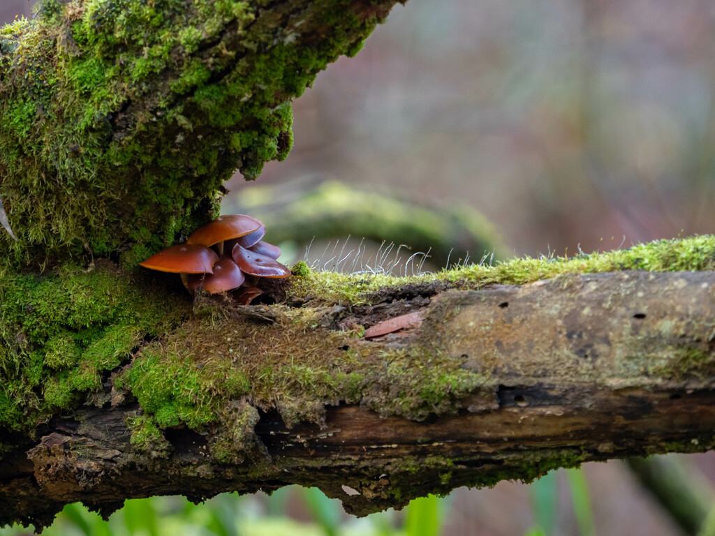 Fungi on the trunk by gosia