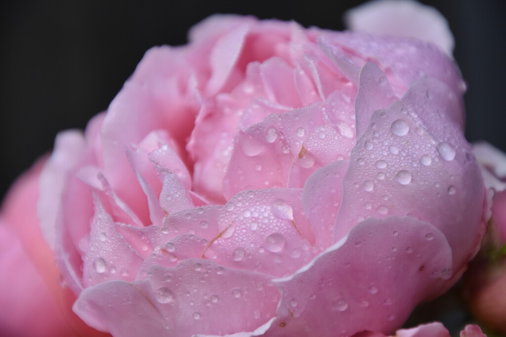 A little fall of rain by casablanca