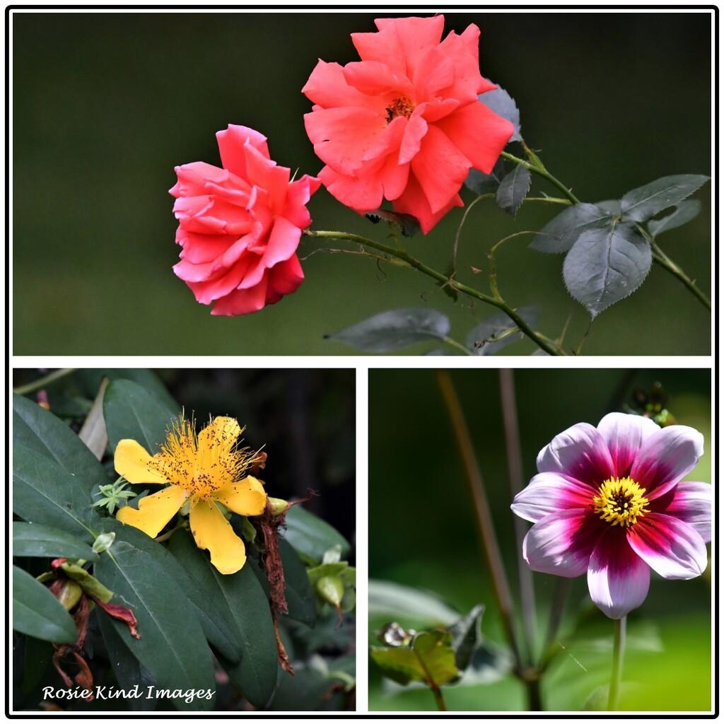 Flowers from my garden by rosiekind