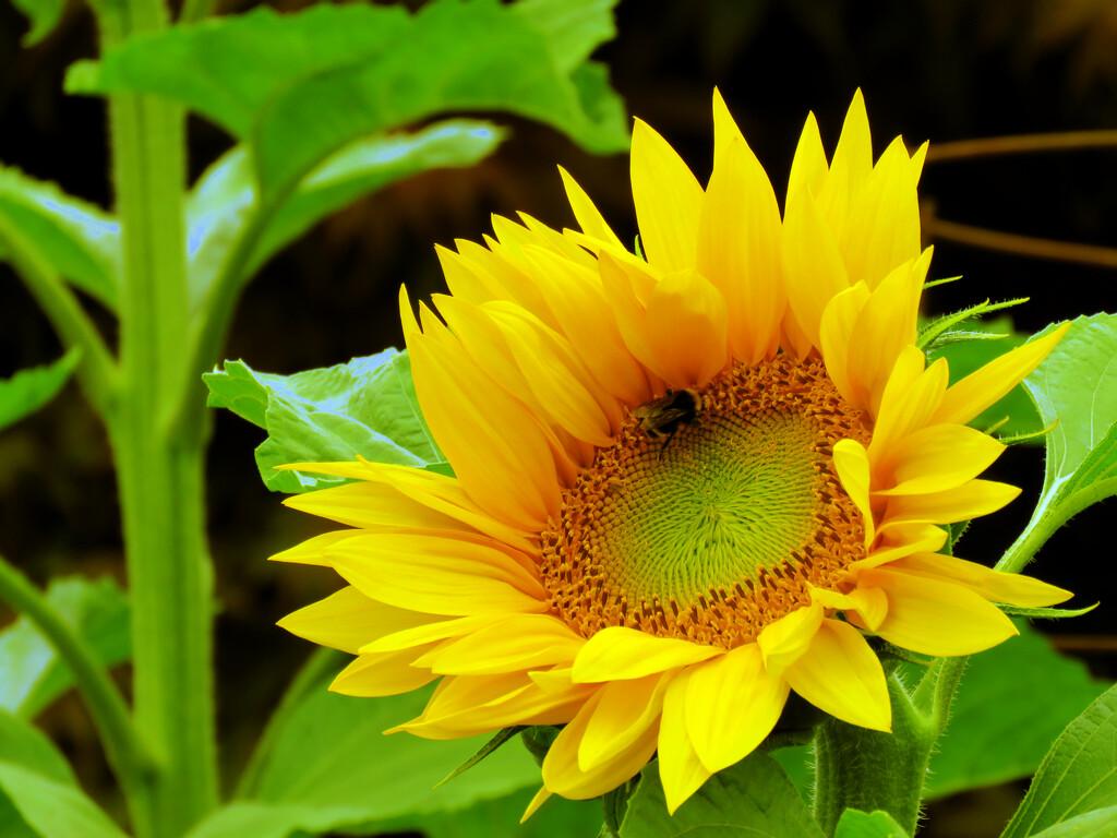 Blooming Stages by seattlite