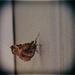 Moth On The Door