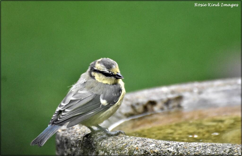 What a dear little bird by rosiekind