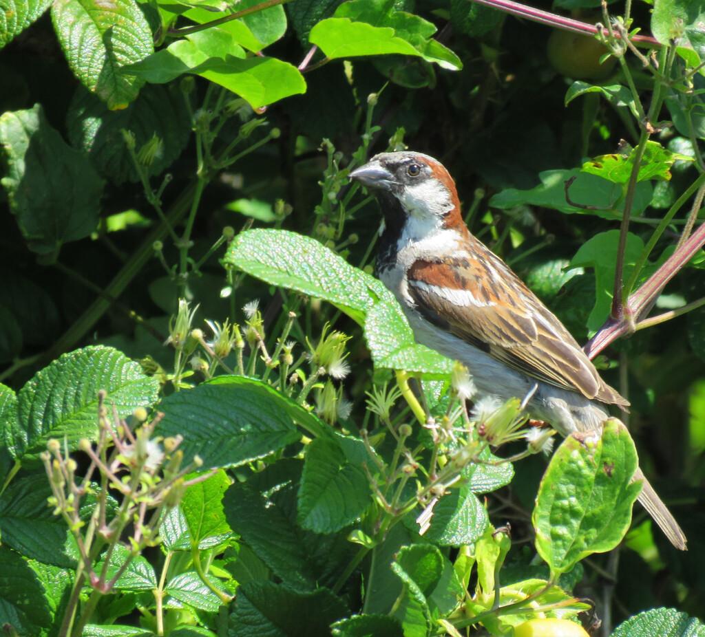Little Bird by seattlite