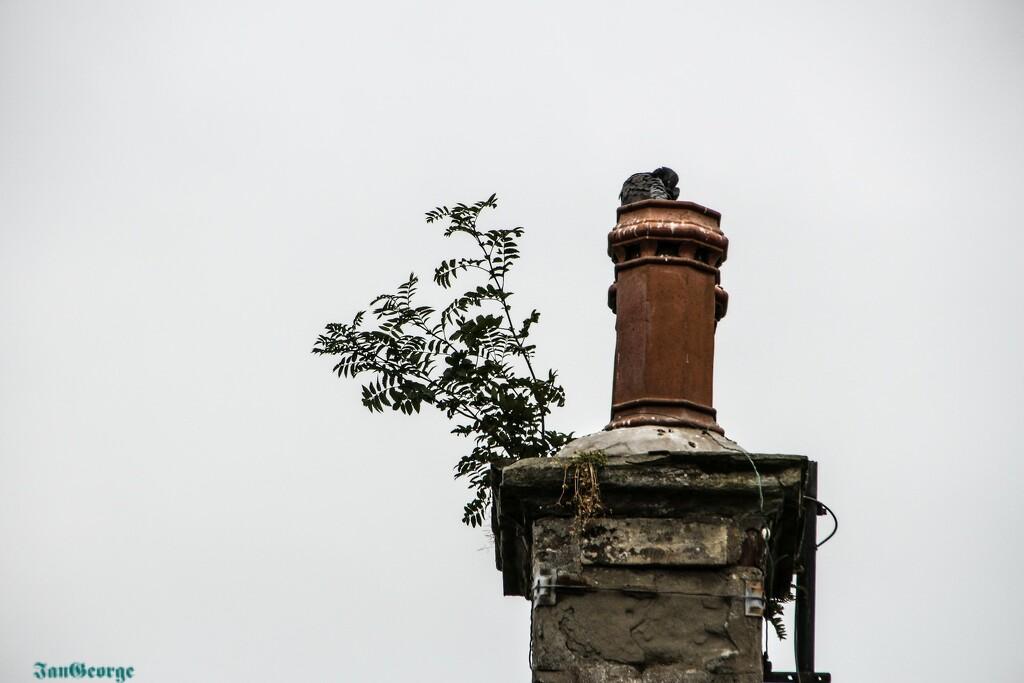 A Scottish Roof Garden by nodrognai