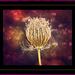 Queen of the Weeds by gardencat