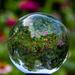Lensball Flowers by cwbill