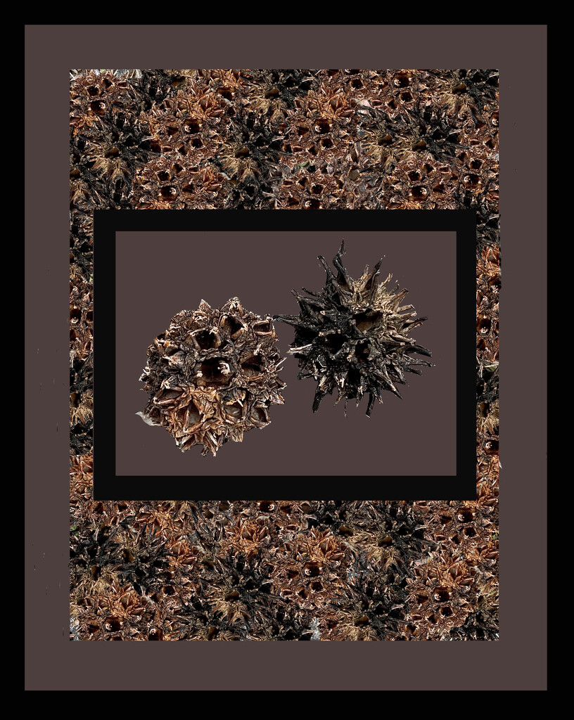 seed pod edit2 by sugarmuser