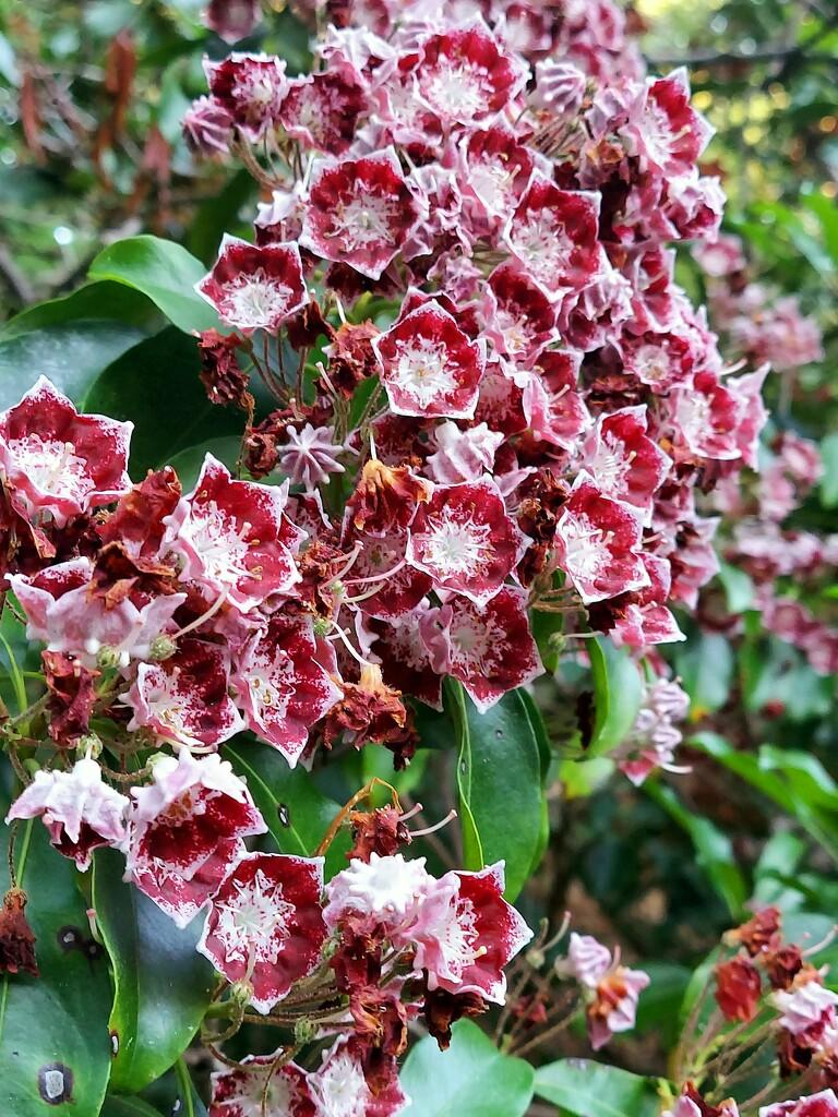 Summer Flowers  by harbie