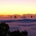 Foggy Brisbane Morning - 3 by terryliv