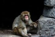 22nd Jul 2021 - Granby Zoo