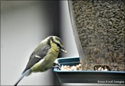 24th Jul 2021 - This will make a change from suet