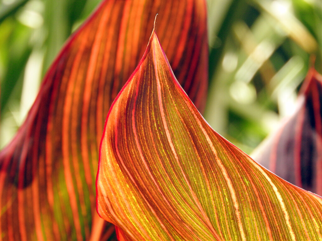 Colorful Leaves by seattlite