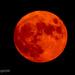 Full Moon Project 2021