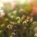 Dead flowers in Light