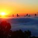 Foggy Brisbane Sunrise - 3