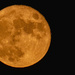 Tonight's Moon Right After Moonrise!