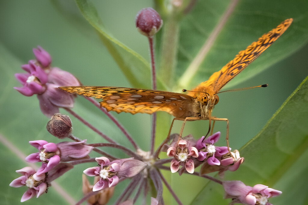 The Butterfly and His Flower by jyokota