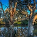 River and gum trees