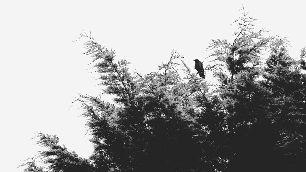 Tree tops  by moonbi