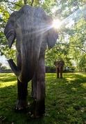 22nd Jul 2021 - Elephant and sun flare