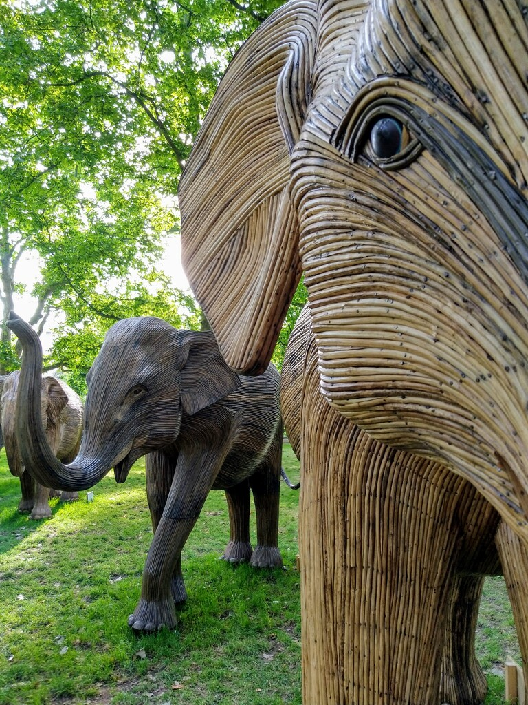 Elephant eye by boxplayer