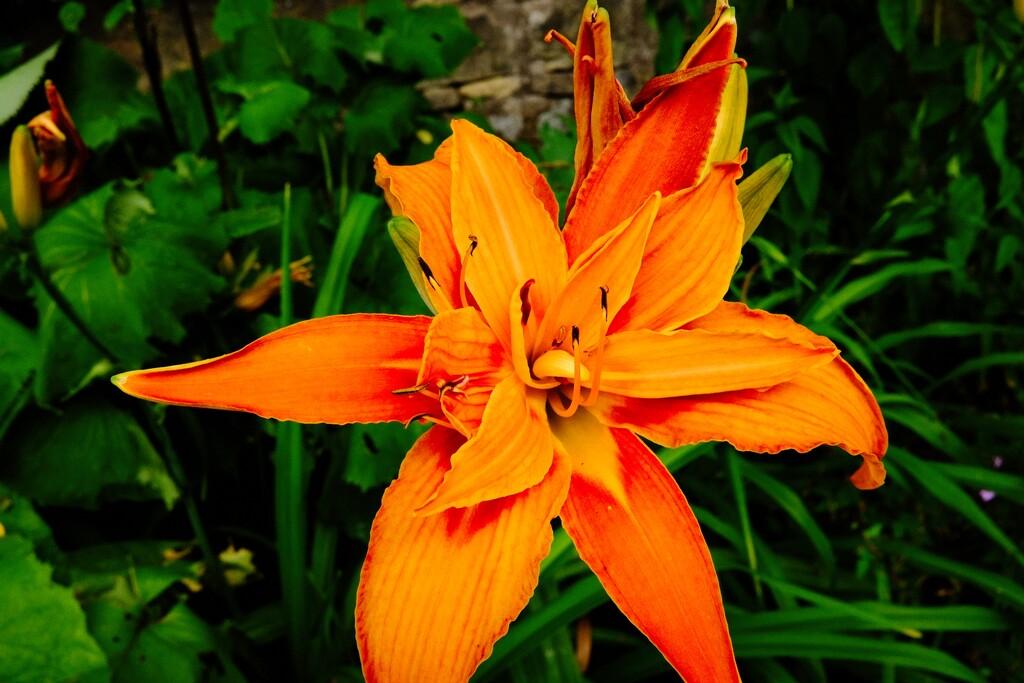 Vibrant Petals by allsop