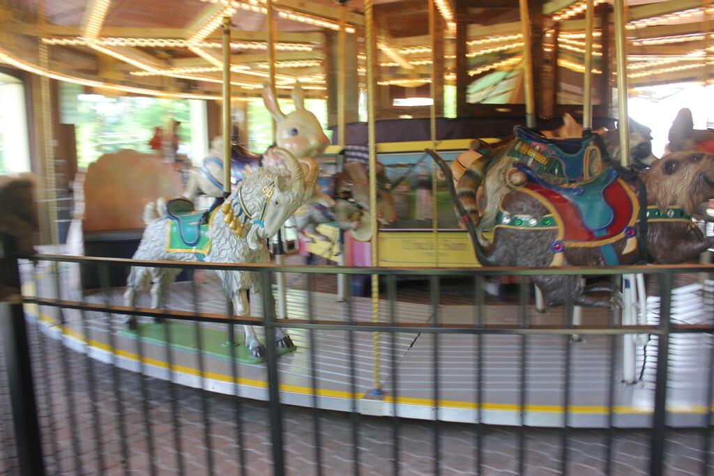 Carousel Day by spanishliz