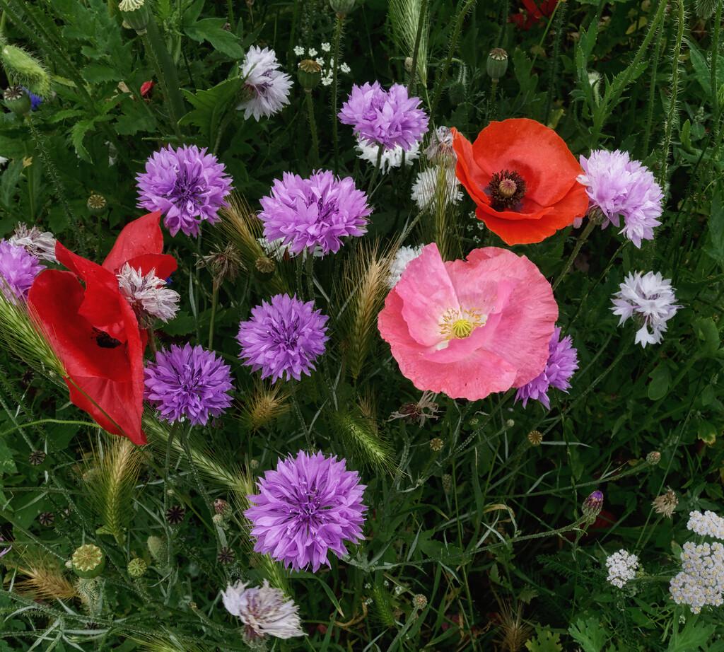 0724 - Wild Flowers by bob65