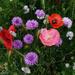 0724 - Wild Flowers