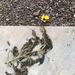 Don't under estimate a flower