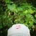 Fav hat
