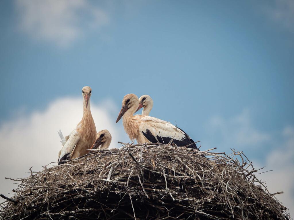 In the stork's nest  by haskar