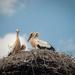 In the stork's nest