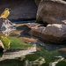 Birds at a water hole