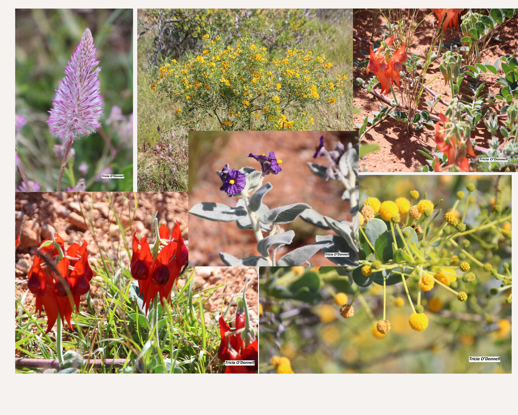 Wild flower Photo Collage by triciaodonnell