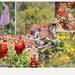 Wild flower Photo Collage