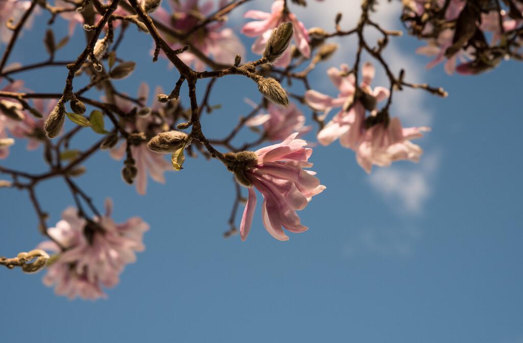 Spring in winter by brigette