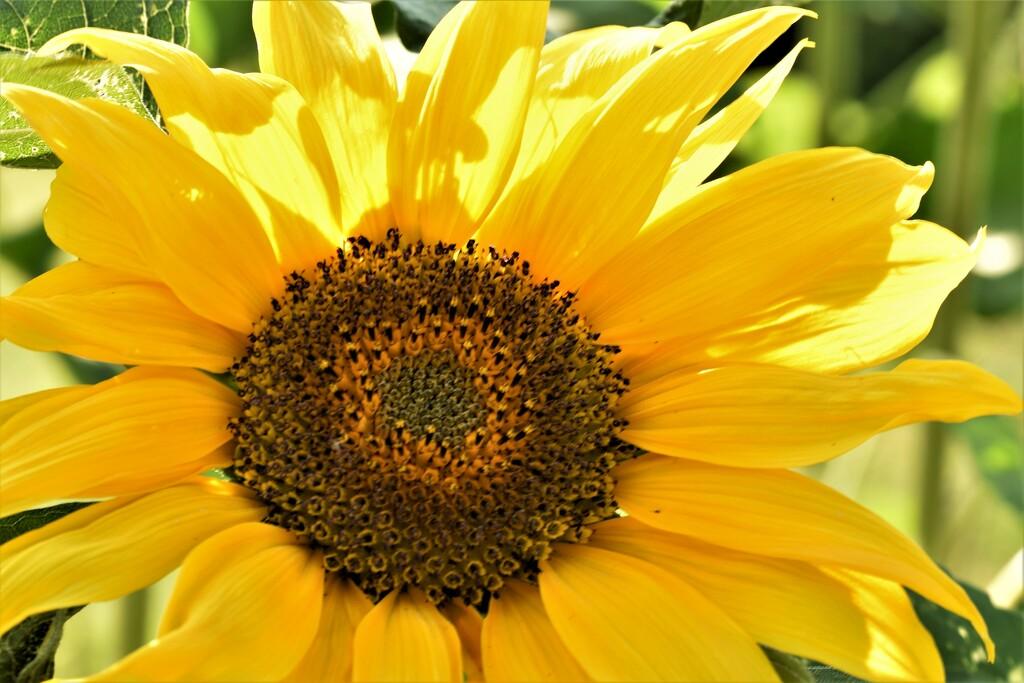 yellow by christophercox