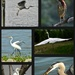 herons&egrets