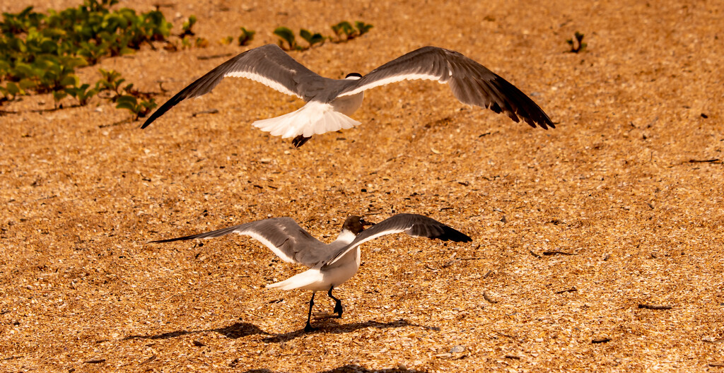Seagulls! by rickster549