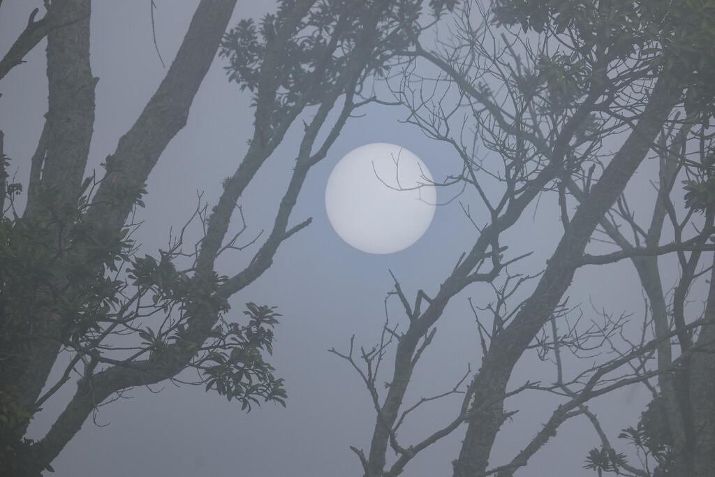 This is not the moon by dkbarnett