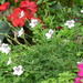 A dainty little plant  - - -