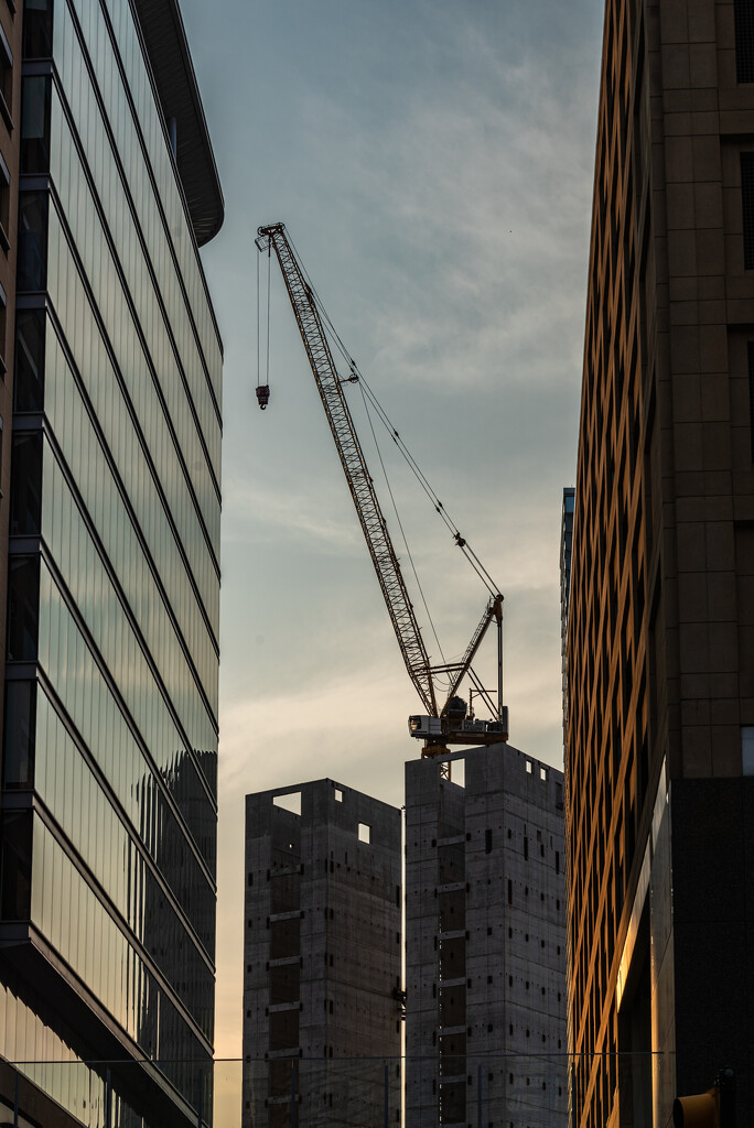crane at golden hour by jackies365