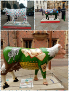 27th Jul 2021 - Cambridge Cows