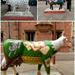 Cambridge Cows