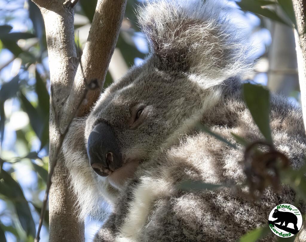 pretty lighting by koalagardens