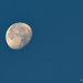 Y12 D208 Quick Morning Moon
