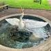 Swan fountain.