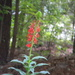 Red Flower in Neighbor's Yard