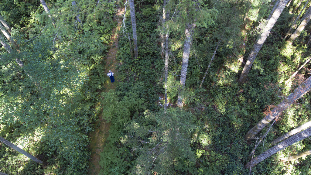 Walk In The Woods by byrdlip